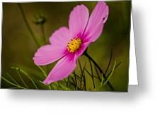 Last Flower Greeting Card