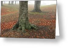 Last Leaves Of Autumn Greeting Card