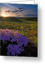 Last Light Of Spring Greeting Card