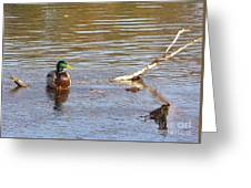 Last Mallard Of Autumn         October       Indiana    Greeting Card