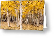 Last Of The Aspen Leaves Greeting Card