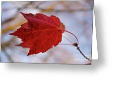 Last Of The Leaves Nature Photograph Greeting Card