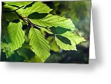 Last Of The Summer Leaves Greeting Card