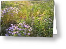 Last Rays Of Sun Light Wildflowers In Moraine Hills Sp Greeting Card