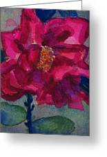 Last Rose Of Summer Greeting Card