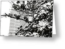 Last Snow Fall  Greeting Card