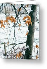 Last Snowy Leaves Greeting Card