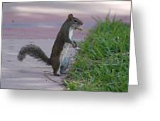 Last Squirrel Standing Greeting Card