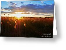 Last Sunset, Plum Island Greeting Card