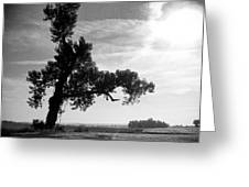 Last Tree Standing Greeting Card