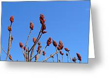 Last Year's Sumac Greeting Card