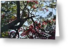 Late Afternoon Tree Silhouette With Bougainvilleas I Greeting Card