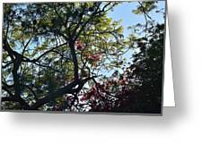 Late Afternoon Tree Silhouette With Bougainvileas II Greeting Card