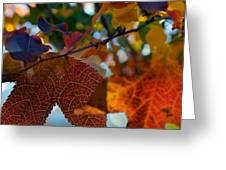 Late Autumn Colors Greeting Card by Stephen Anderson