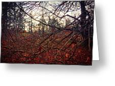 Late Autumn Morning Greeting Card