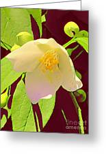 Late Spring Flower Greeting Card