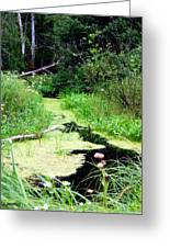 Late Summer At The Creek Greeting Card