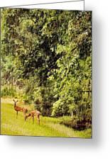 Late Summer Deer Greeting Card