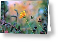 Late Summer Rain From The Forest Floor Greeting Card