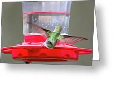 Later Hummingbird Greeting Card