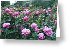 Laugerfeld Roses Greeting Card
