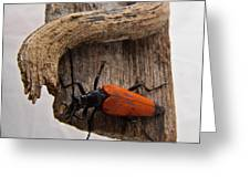 Laughing Beetle Greeting Card