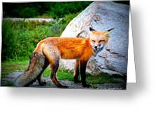 Laughing Fox Greeting Card
