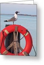 Laughing Gull At Lewes Greeting Card