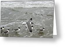 Laughing Gulls Iv- Follow Me Greeting Card