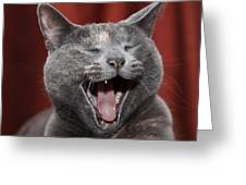 Laughing Kitty Greeting Card