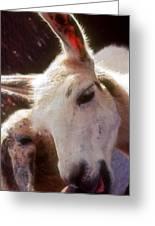 Laughing Llama Greeting Card