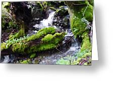 Laughing Waters Greeting Card by JoAnn SkyWatcher