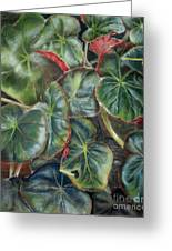 Laura's Begonia Greeting Card