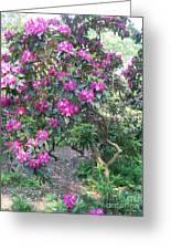 Laurel Mountain Tree Greeting Card