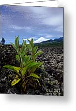 Lava And Villa Rica Volcano Greeting Card
