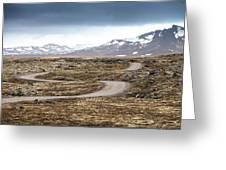 Lava Field In Iceland Greeting Card