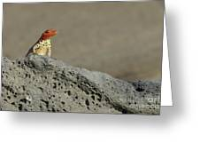 Lava Lizard On Lava Rock Greeting Card