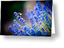 Lavander Flowers Macro With Bee In Lavender Field Greeting Card by Raimond Klavins