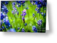 Lavander Flowers With Bee In Lavender Field Macro Artmif Greeting Card
