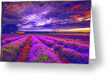 Lavandula Greeting Card