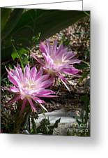 Lavendar Cactus Flowers Greeting Card