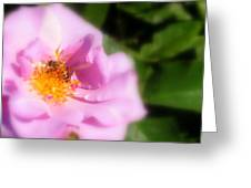 Lavendar Rose With Bee Greeting Card