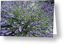 Lavender 2 Greeting Card