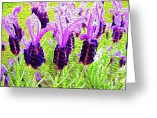 Lavender Abstract Greeting Card