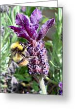 Lavender And Busy Bee. Greeting Card