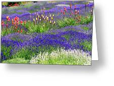 Lavender And Flowers Oh My Greeting Card
