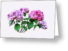Lavender And Rose Hydrangeas Greeting Card