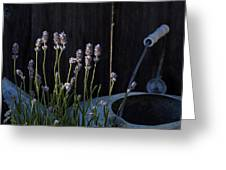 Lavender And Watering Can Greeting Card