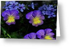 Lavender And Yellow Pansies Greeting Card