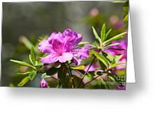 Lavender Rhododendrun Greeting Card